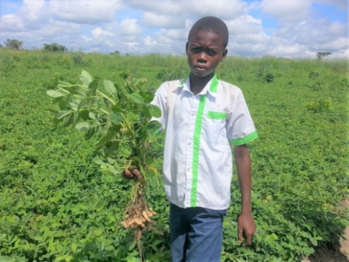 Agricultural project in Mabala brings first field yields
