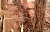 ...die Termiten fressen das Holz von innen.