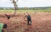 Jean (links unten) leitet Arbeiter an in der Vorbereitung von 5 Hektar Land für neuen Maniok.