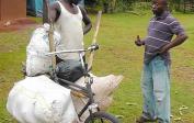 Jean mit Ananas Fahrrad Transporter.