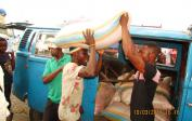 500 kg of special maize seeds for agricultural project