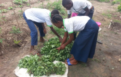 The students from the agricultural section of the school receive hands-on training