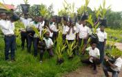 Die Schüler/innen bringen Palmnussbäume von unserer Schule auf die Plantage