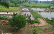 Rechts: Fischteiche Links: Reis- & Maisfeld