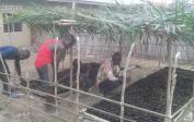 22. Agronom Philemon (rechts) errichtete diese Palmölbaumschule